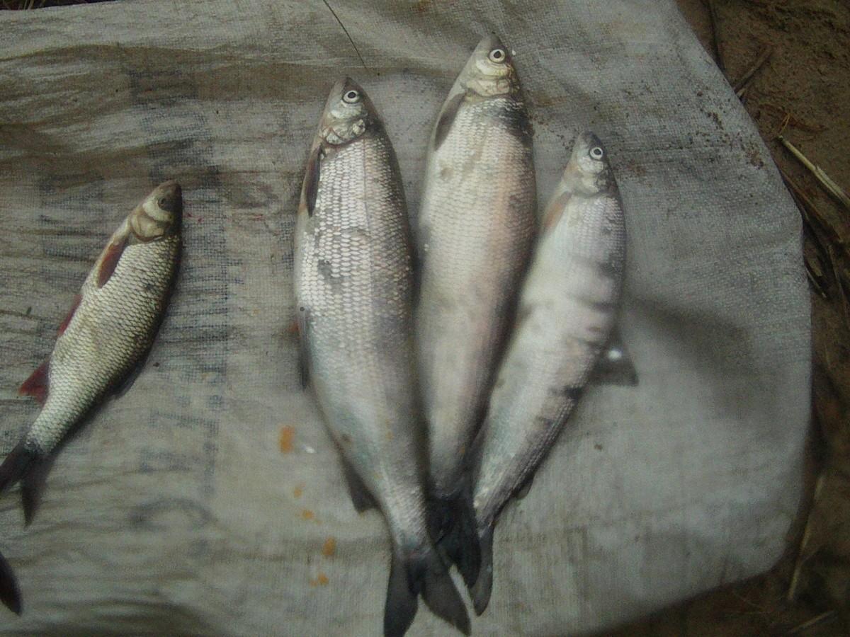 Установлен факт незаконной добычи водных биологических ресурсов запрещенным орудием лова